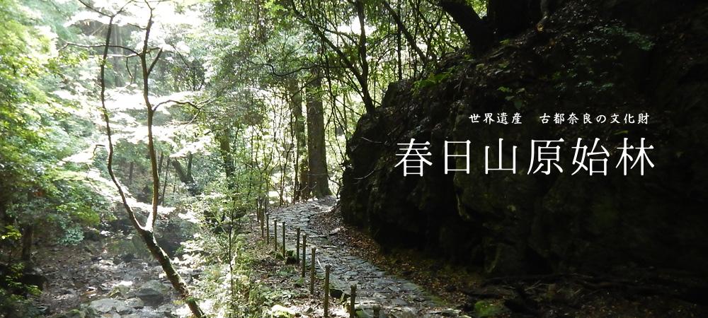世界遺産 古都奈良の文化財 春日山原始林