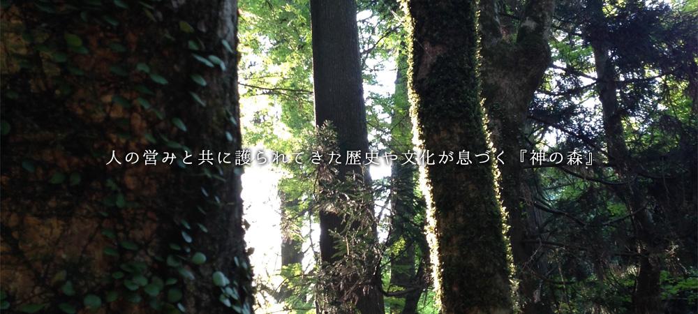人の営みと共に護られてきた歴史や文化が息づく『神の森』