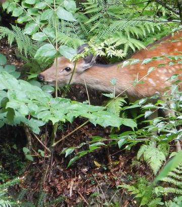 原始林に生息するいきものとの関係