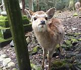 鹿との共生