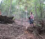 拡大樹種の調整