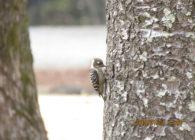 【報告】1/21 バードウォッチングin春日の森 実施しました!