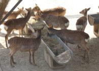 【報告】「奈良町の変遷からシカを考える」―角きり・鹿寄せ・ばったり戸―