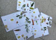 【報告】7/26 春日山原始林BOOKをつくろう!実施しました。