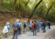 【報告】第20回春日山原始林観察会