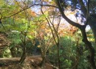 11/16 秋の春日山原始林ウォーク