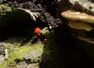 第28回春日山原始林観察会 夏の森できのこをみつけよう!
