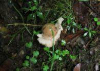 7/4 夏の森できのこを見つけよう 開催しました!